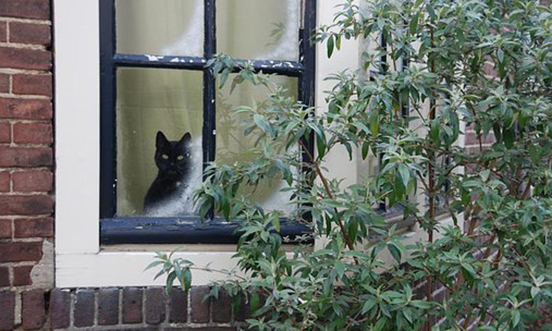 CITE: les portes et fenêtres à nouveau prises en charge!